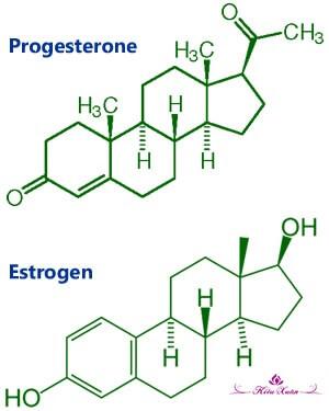 Estrogen và progesterone